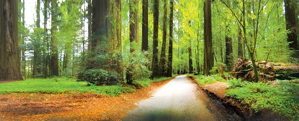 I Fondly Think About the Times Me and My Son Went To The Redwood Forest