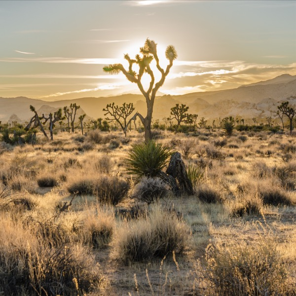 Joshua Tree Has So Much To Offer; Sunsets, Desert and Bunny Rabbits