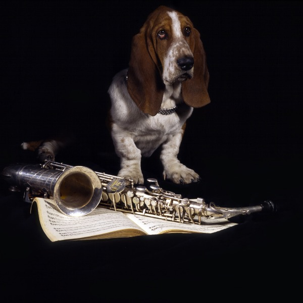 The Basset Horn. It's not a horn at all.