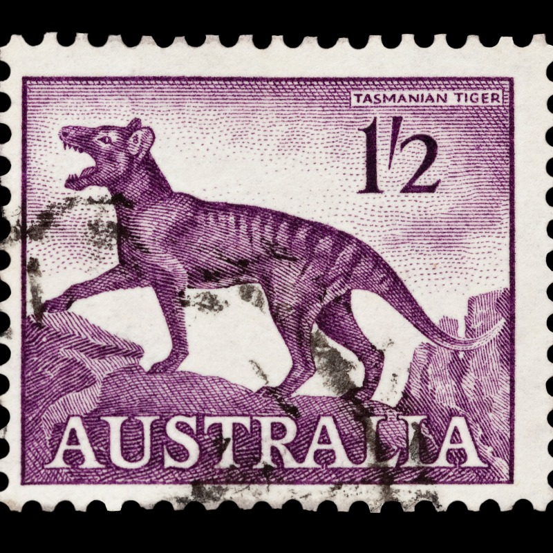 If we cloned it, the tasmanian tiger could get even more stamps!