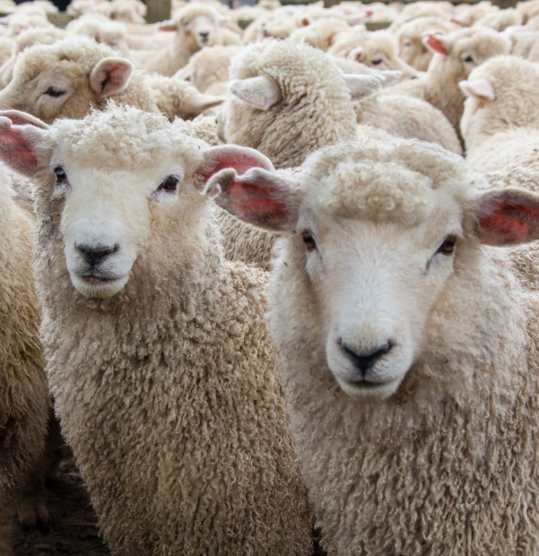 If we can clone sheep, how far could we possibly be from a mammoth?