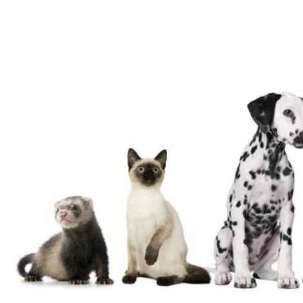Cats And Dogs: Which Is Better For The Avid Traveler?