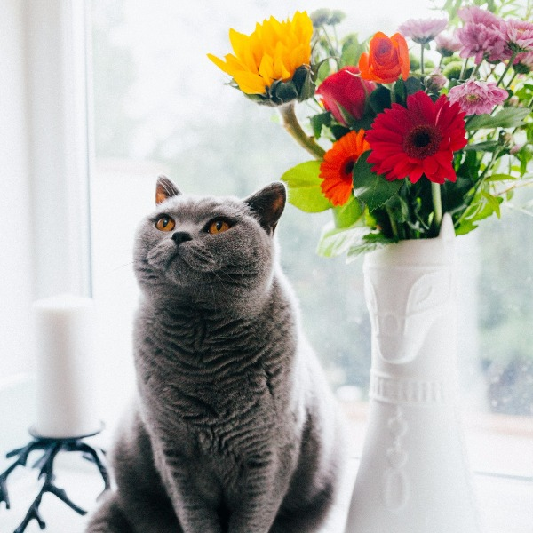Using Cute Cats For Mindfulness