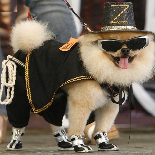 Stop putting your dogs in dog clothes! It's stupid!