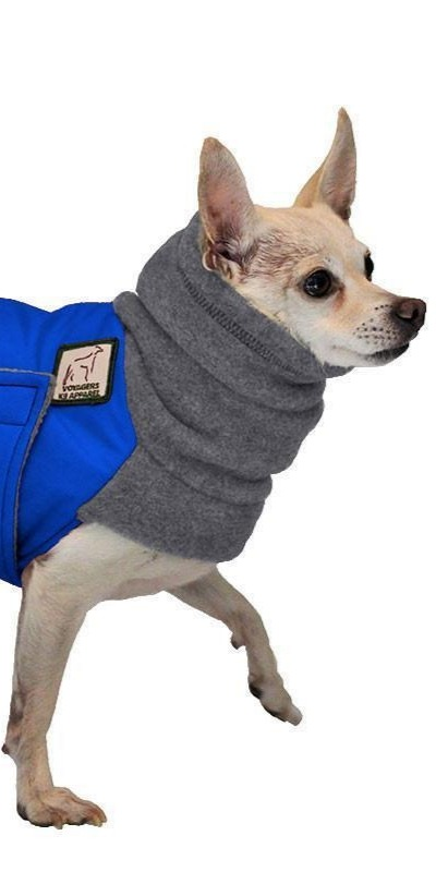 Chihuahuas are another breed that a coat is a good investment for.
