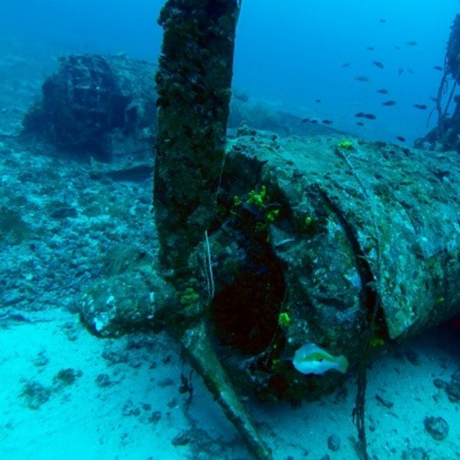 Wreck of a downed airplane.