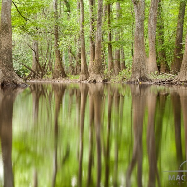 Why Congaree National Park Is So Impressive And Unique