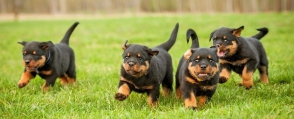 Getting their exercise!