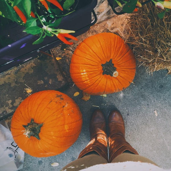 My Favorite Type Of Farm Is A Pumpkin Farm With Acres For Days