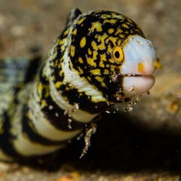 Peru's Moray Is Not Full Of Scary Eels. I Feel Cheated And a Little Silly