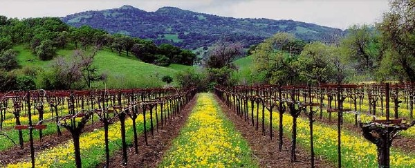 I love to walk the vines